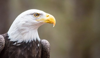 Endangered Species That Have Bounced Back
