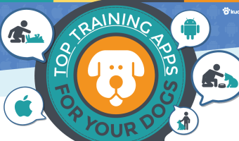 Top Training Apps for Your Dog