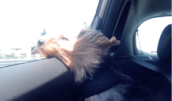 Norwegian Adventures: Bringing My Dog to the USA