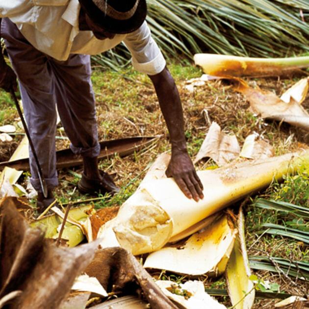 Palmherzen  Kchengtter