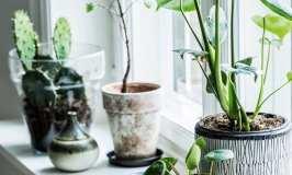 Zelenilo kao najljepši ukras
