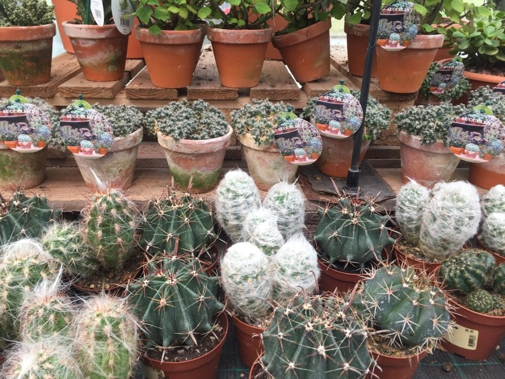 U svijetu kaktusa