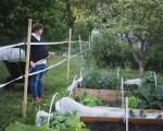 Helppo kasvimaa - kasvikset omasta maasta