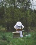 Meille tuli mehiläisiä
