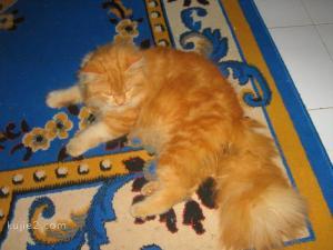 kucing5