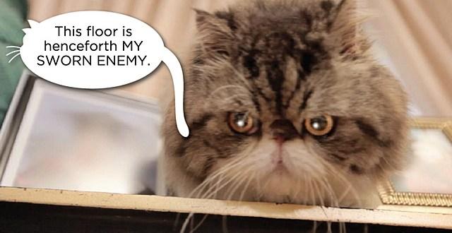 Adakah Lantai Rumah Sesuai Untuk Kucing?