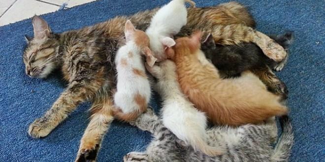 Ubat Cacing Anak Kucing