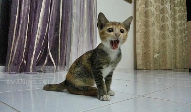 kucing-comel;