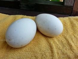 Masak Lemak Cili Api Telur Angsa Belimbing Buluh