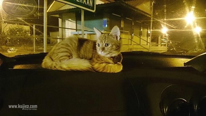 cuti terengganubawa kucing travel