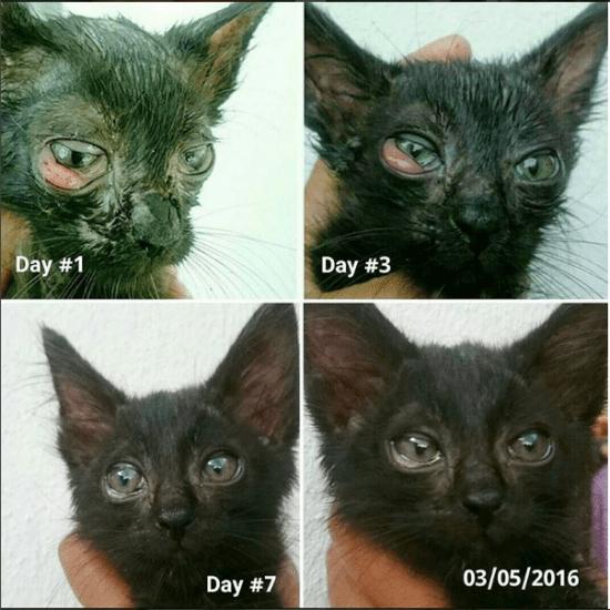 kucing mata sakit