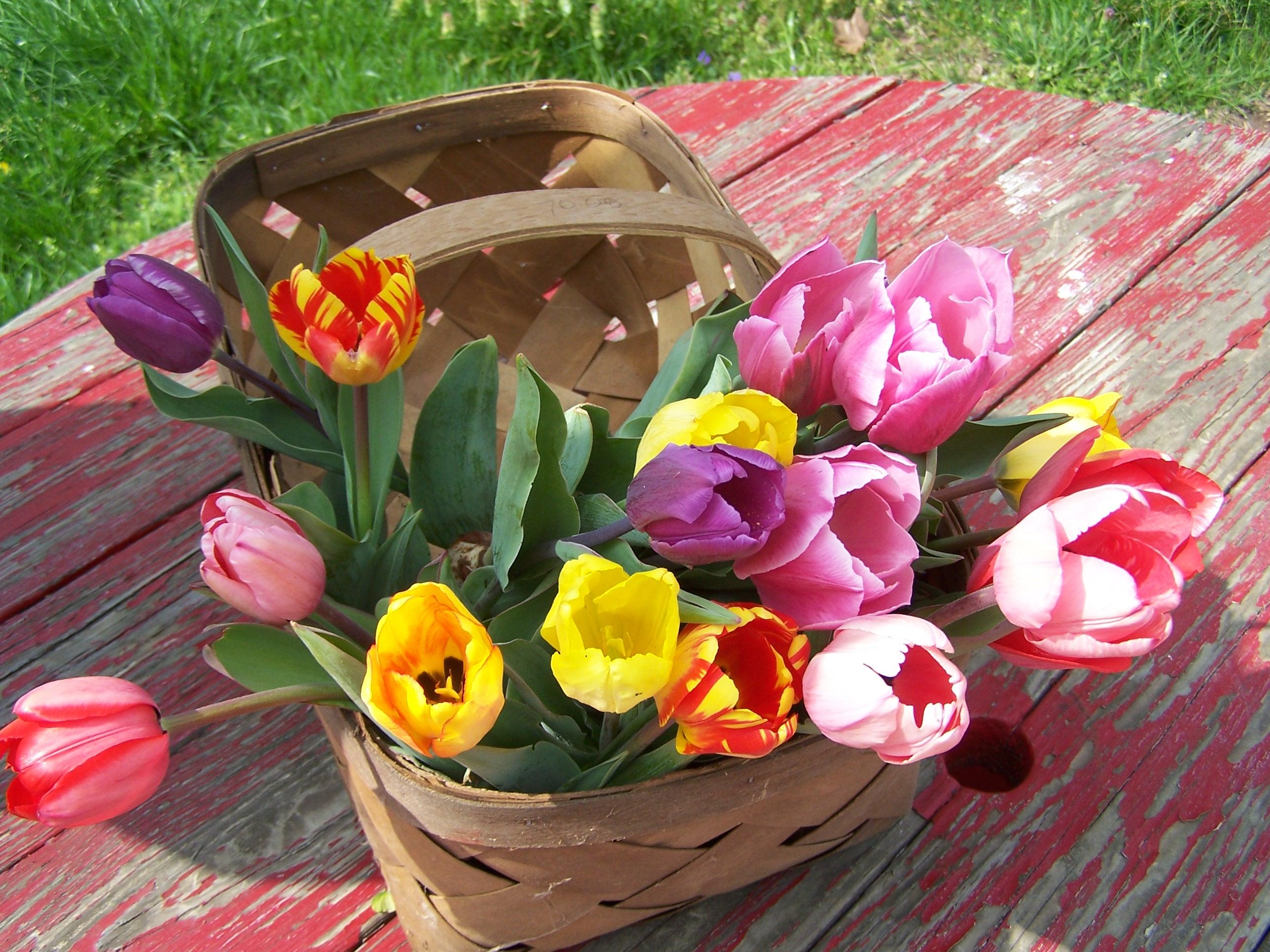 Kukyflor Cuatro Razones Para Decorar Con Tulipanes