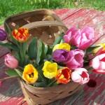 canasta-tulipanes-colores-flores-decoracion