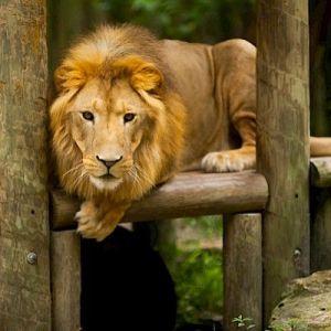 kulaqua retreat and conference center zoo lion images florida's best christian retreat location kulaqua