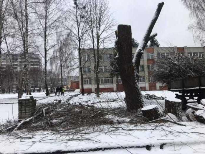 У Львові зрізали дерева. Фото Варта-1