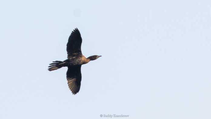 На Хортиці виявили новий вид птахів. Фото: Сергій Козодавов