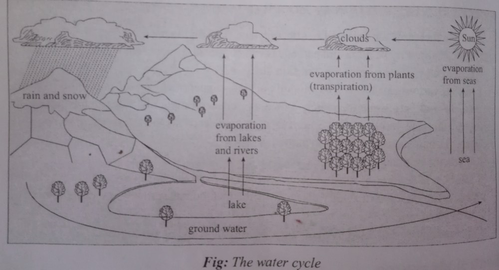 medium resolution of fig water cycle