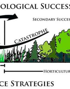 Source ecology project weebly fig succession also concept of community and kullabs rh