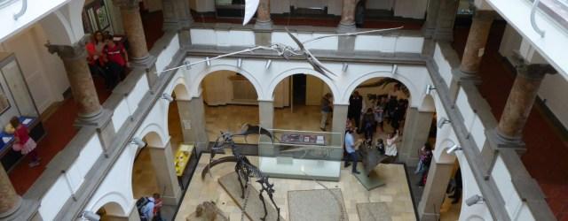 Lichthof Paläontologisches Museum
