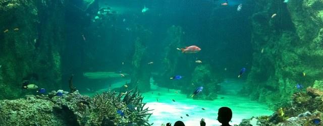 Sealife im Münchner Olympiapark