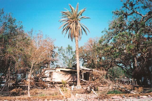 Was vom Father Ryan House übrigblieb — das schöne, alte Holzhaus hatte in 164 Jahren zahlreiche Hurrikane überstanden, u.a. den Kategorie-5-Hurrikan Camille. Zum Glück war niemand im Haus, als Katrina zuschlug.