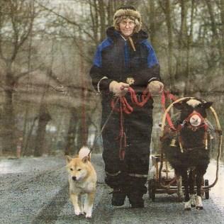 Ulla Alm 1999. Ulla har spänt för sin fina bagge Ferdinand och är på väg till Bagartorp för att handla. Kingis är med. Foto: Anders Gustafsson.