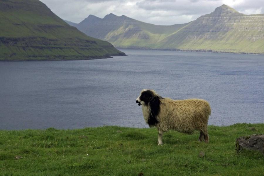Faroer4