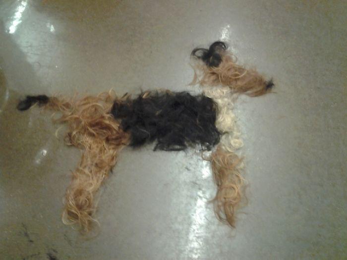 Вот чем иногда занимаются скучающие парикмахеры на работе в ожидании клиентов.