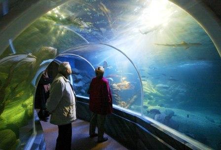 Aquarien in Schleswig Holstein und Hamburg