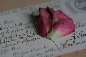 Rose auf einem Brief