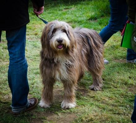 Pflanzenmarkt am Kiekeberg - Hunde sind im Museum auch herzlich willkommen.