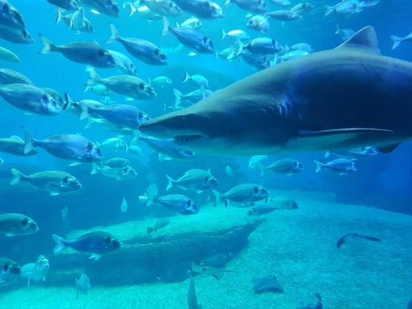 Palma Aquarium (8)