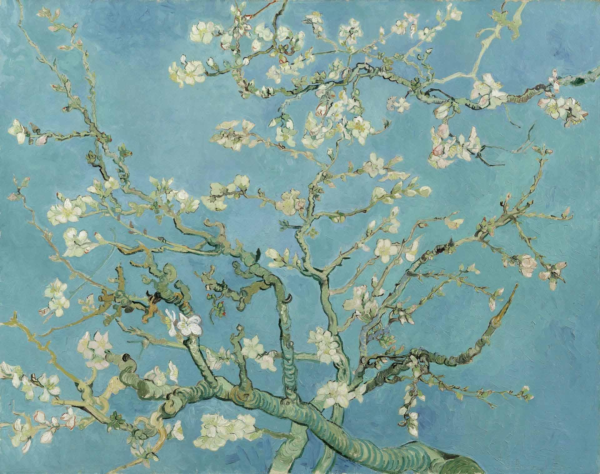 Vans X Van Gogh Museum Visi