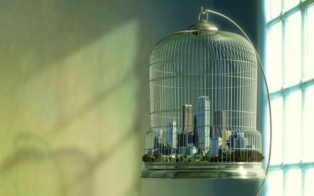 Bird cage city