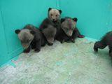 熊牧場フォトギャラリー