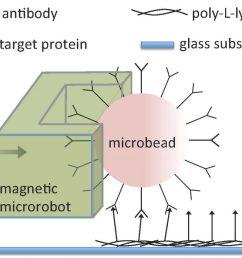 magnetic bead diagram [ 1024 x 851 Pixel ]