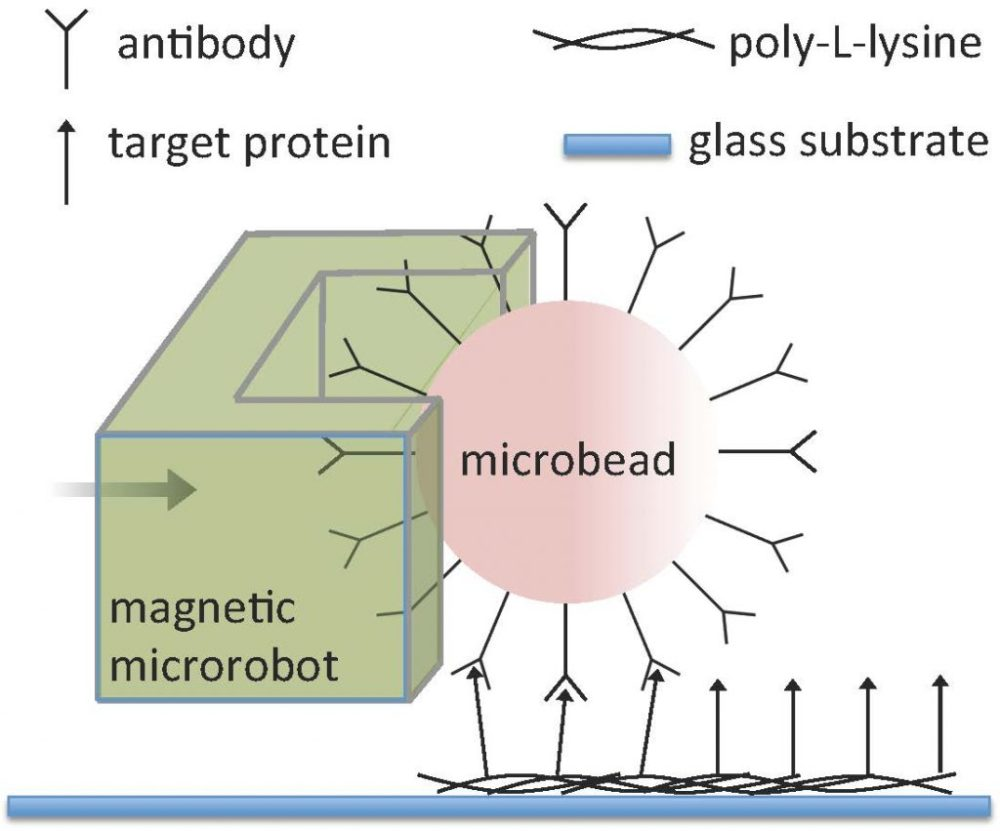medium resolution of magnetic bead diagram
