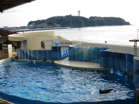 江ノ島水族館4