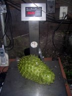 Sour Sop at 6.22 lbs.