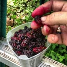 freshberries