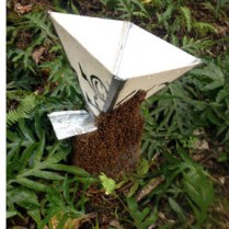 Bee funnel and capture