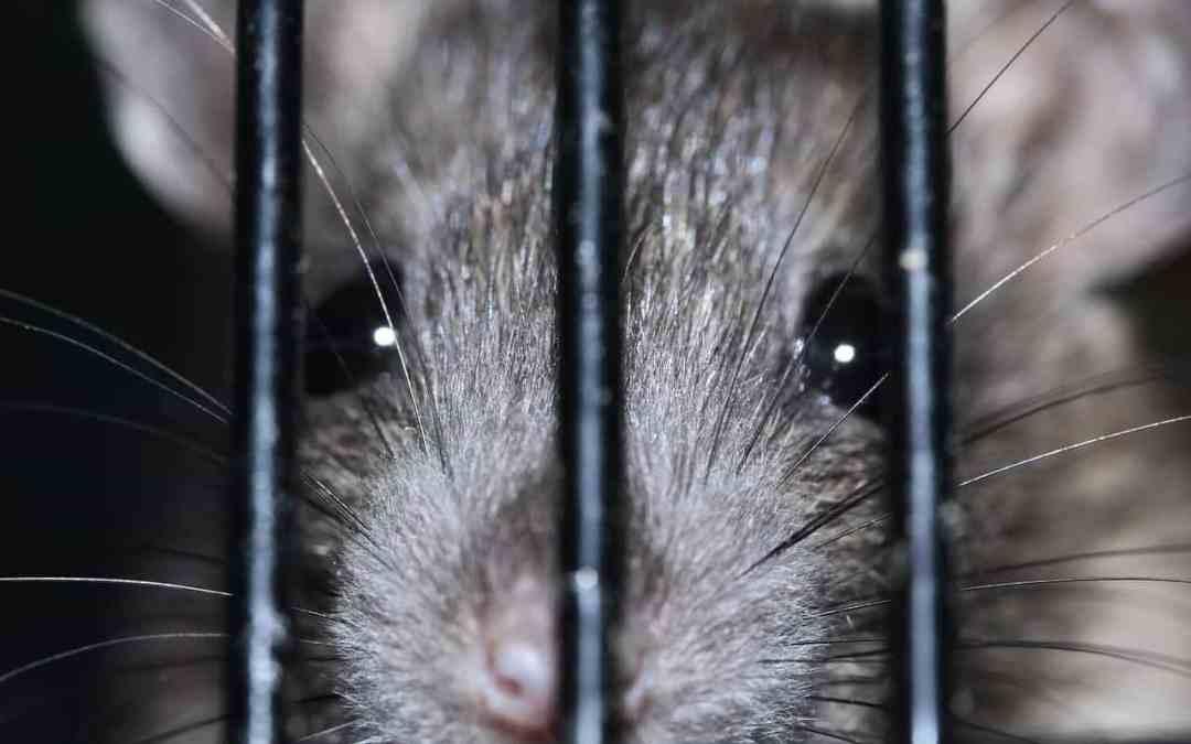 Was Ratten und die AfD gemeinsam haben – Kundenorientierung.coach