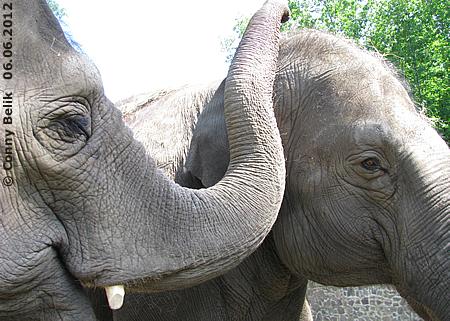 Motki & Yasmin im Sósto Zoo