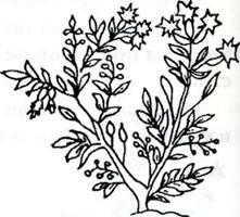 Лекарственные вещества растительного происхождения