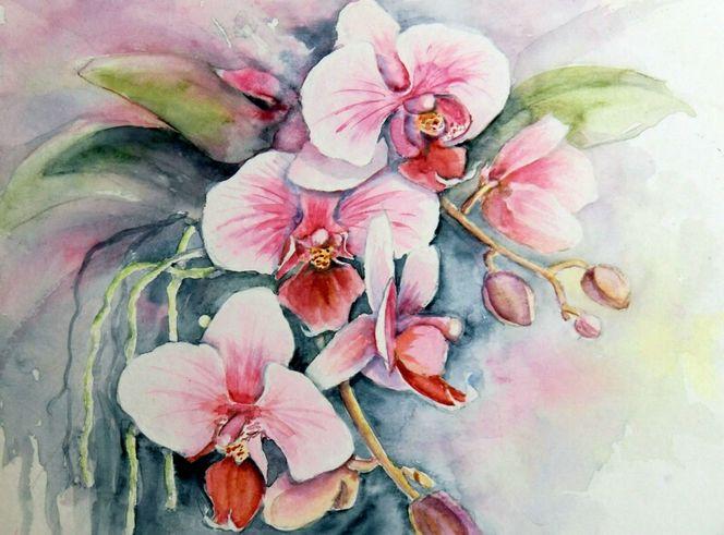 Orchidee V  Aquarellmalerei Blumen Orchidee Aquarell