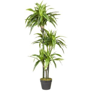 HTT Decorations - Kunstplant Dracaena Lemon Lime H120cm - kunstplantshop.nl