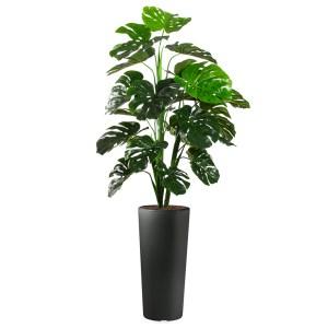 HTT - Kunstplant Monstera in Clou rond antraciet H185 cm - kunstplantshop.nl