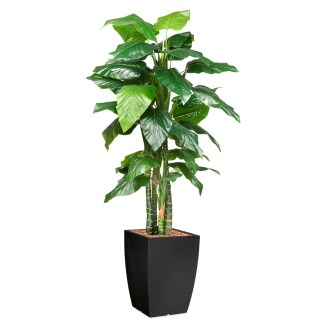 HTT - Kunstplant Philodendron H195cm in Genesis43 antraciet - kunstplantshop.nl