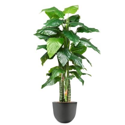 HTT - Kunstplant Philodendron H195cm in Eggy45 antraciet - kunstplantshop.nl
