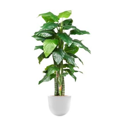HTT - Kunstplant Philodendron H195cm in Eggy45 wit - kunstplantshop.nl